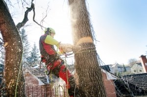 tree removal toronto